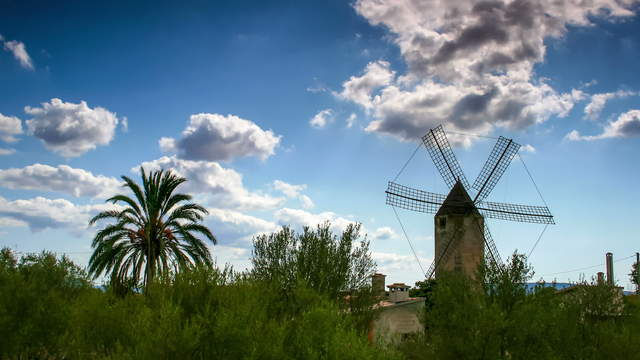 Windmill and Palm Trees