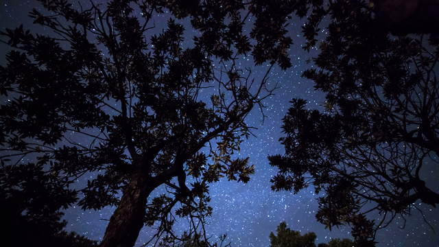 Starry Sky Below Trees