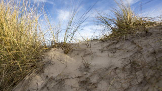 Baltic Sea with dune